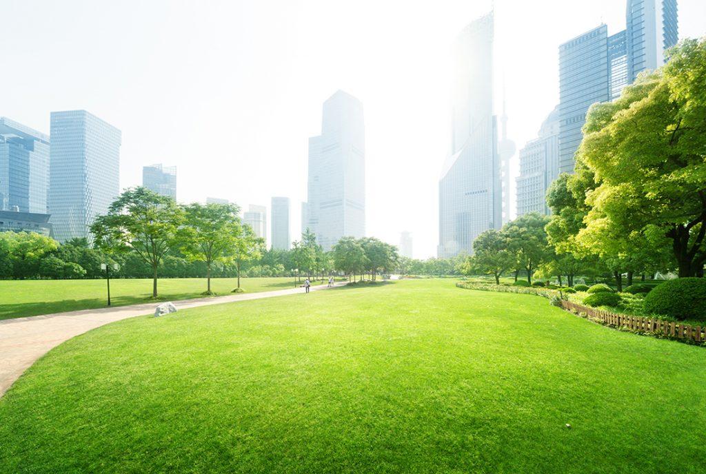 a green urban space
